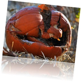 dusting_of_snow_on_rotting_pumpkin